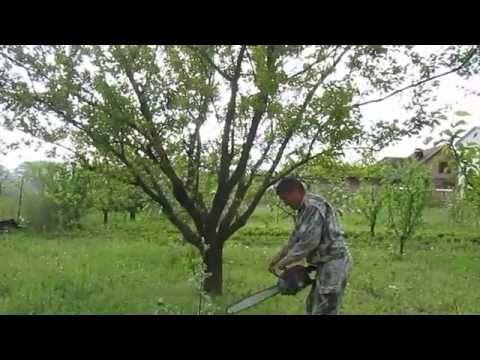 обрезка абрикоса - YouTube