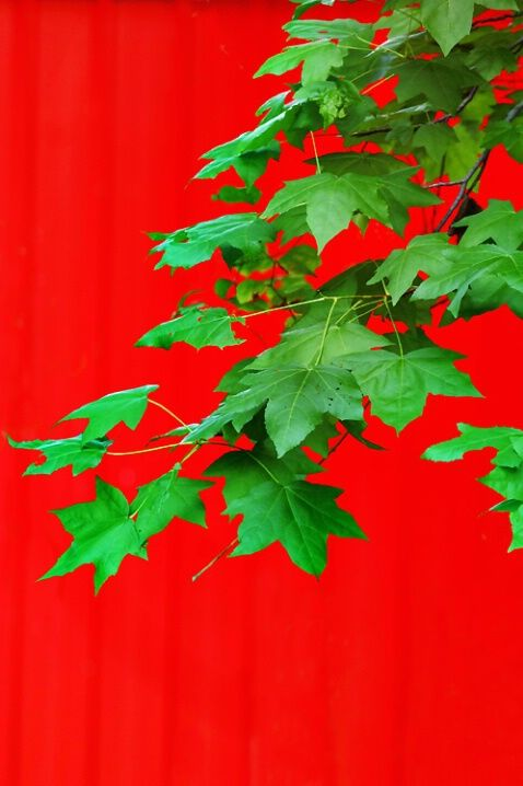 red and green lovelies ..X  ღɱɧღ   ✿⊱╮Best digital cameras and more at BetterPhoto.com