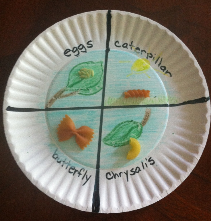 Pasta Butterfly Life Cycle - Reddish/Orange | Crafts ...