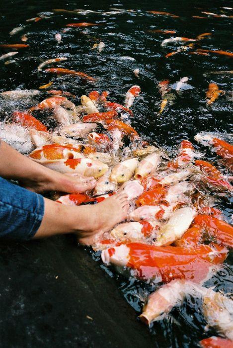 Nelle vasche dei pesci