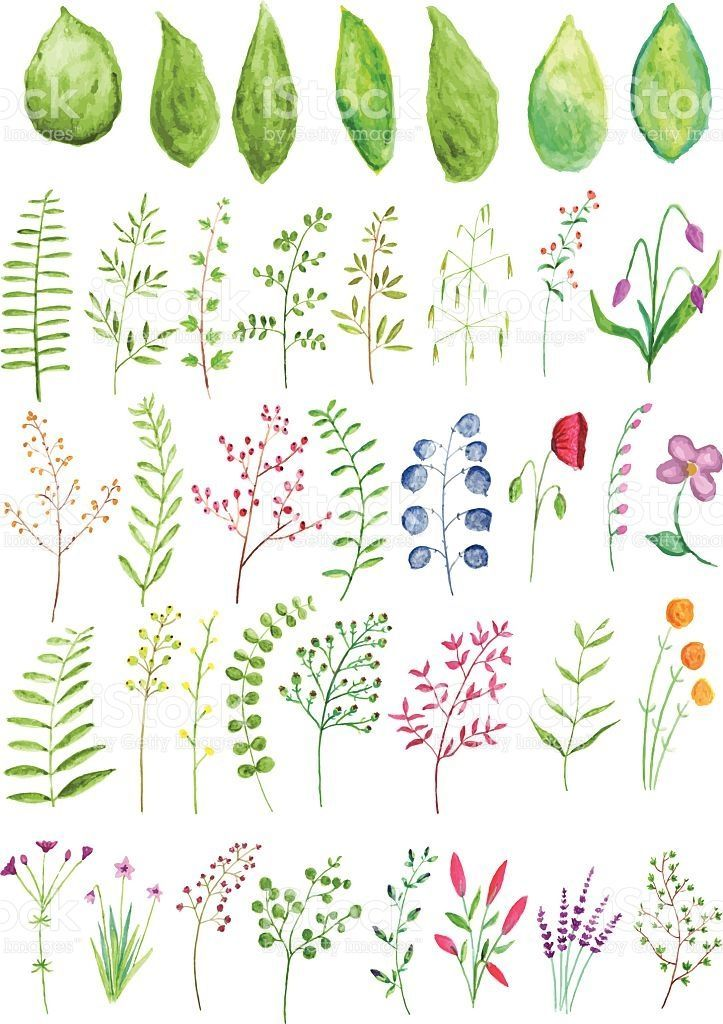 A vector set of watercolor plants and branches