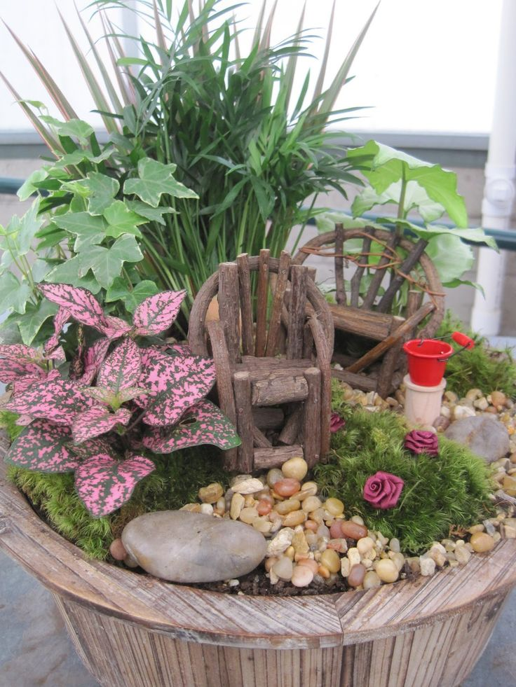 Miniature Fairy Gardens Plants Plants Flowers And Such