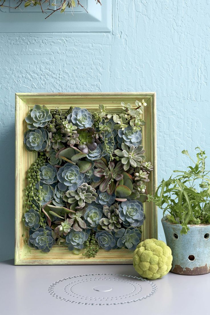 Hello, cutie! You don't need a huge outdoor space to enjoy vertical gardening. Take inspiration from this small box frame, planted up with a mix of striking succulents. So sweet!