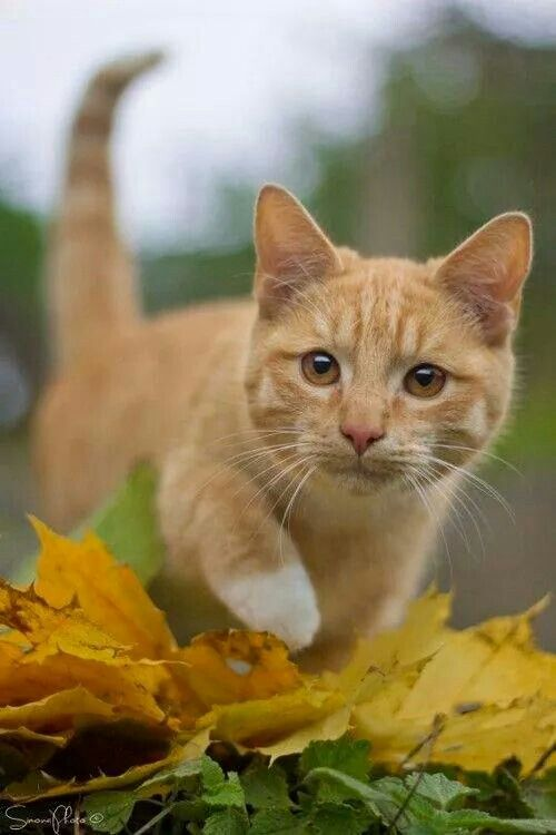 Mejores 1025 im genes de don gato en pinterest gatitos for Gato de carpintero