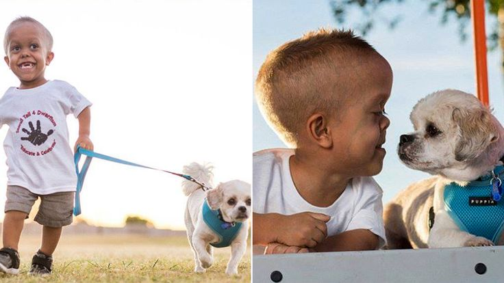 See how a new dog helped a 5-year-old boy with dwarfism stand tall to bullies