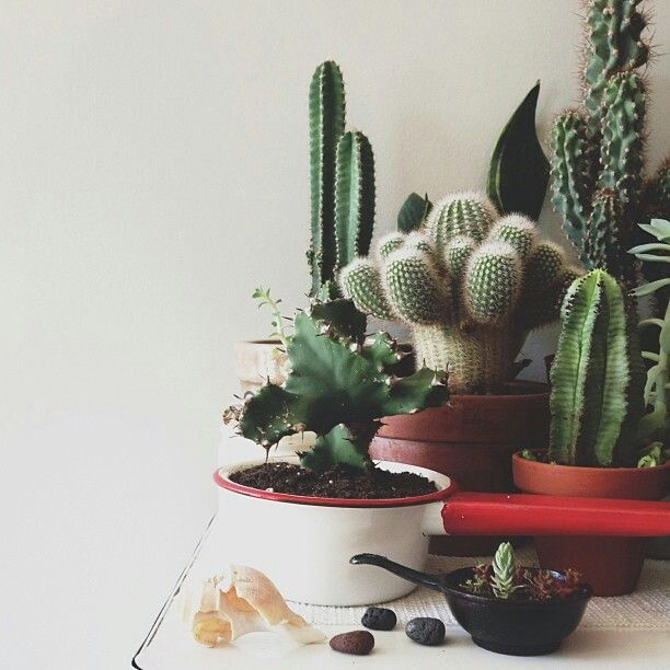I Never Really Used To Like Cacti And Succulents, They Didnt Have Pretty  Colors, But Now I See That They Have Great Textures And A Wide Variety Of  Shades.