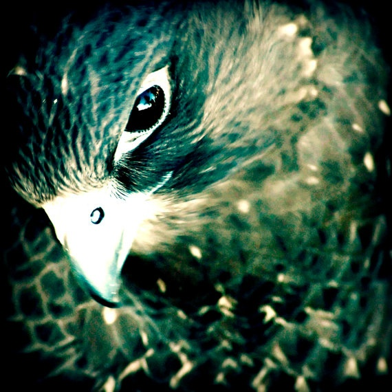 Falcon. The symbol of this bird is warlike...my daughters name means warlike...hmm tat idea