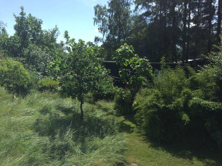 Se lige det her fede opslag på Airbnb: Charmerende sommerhus i lukket have - Huse til leje i Sjællands Odde