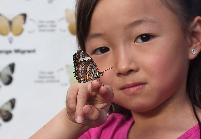 Bliss is ...holding a butterfly: Photos, Butterfly, Butterflies, Saraphim, Holding, Bliss