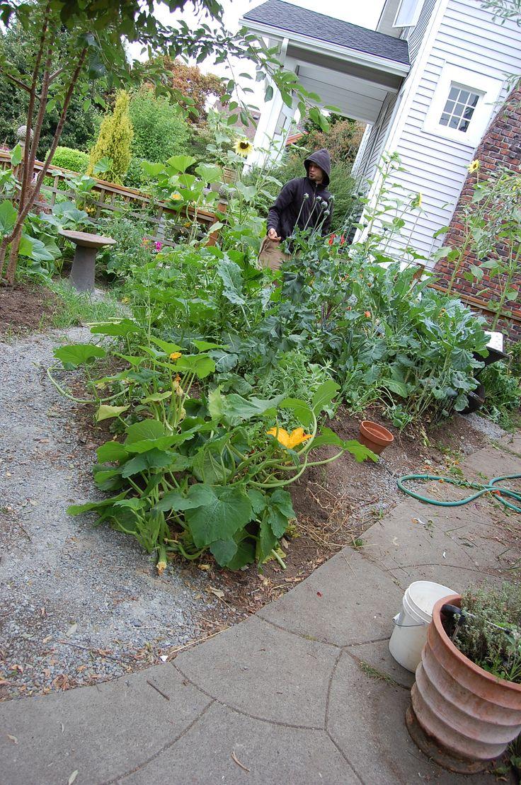 Seattle Wa, Urban Permaculture, Biodynamic Food Gardening :) .... FOod
