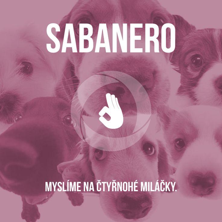 Zaměstnanci Sabanero týmu se každoročně skládají na opuštěné pejsky v útulku. Výjimkou nebyl ani minulý rok, kdy jsme o Vánocích vybrali krásných 3 500 Kč, za které jsme nakoupili spousty skvělých dobrůtek. :-)  www.sabanero.cz  #psi