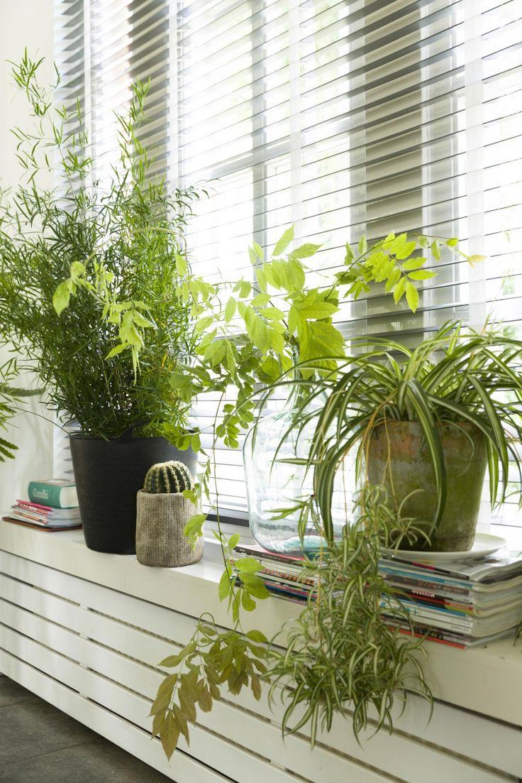 9-planten-vensterbank