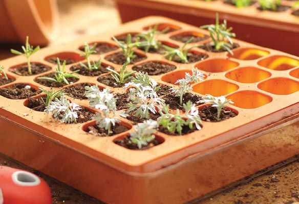 Start Seeds at Home for spring with a Seed Starter Kit | Garden Club