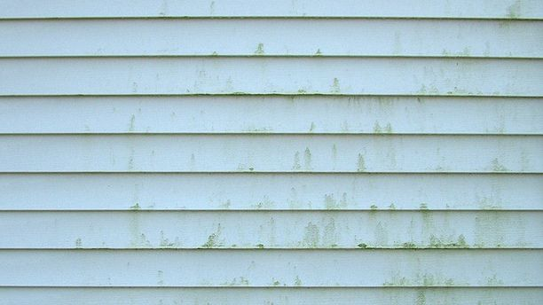 Clean Mold Off Vinyl Siding Without Harsh Chemicals