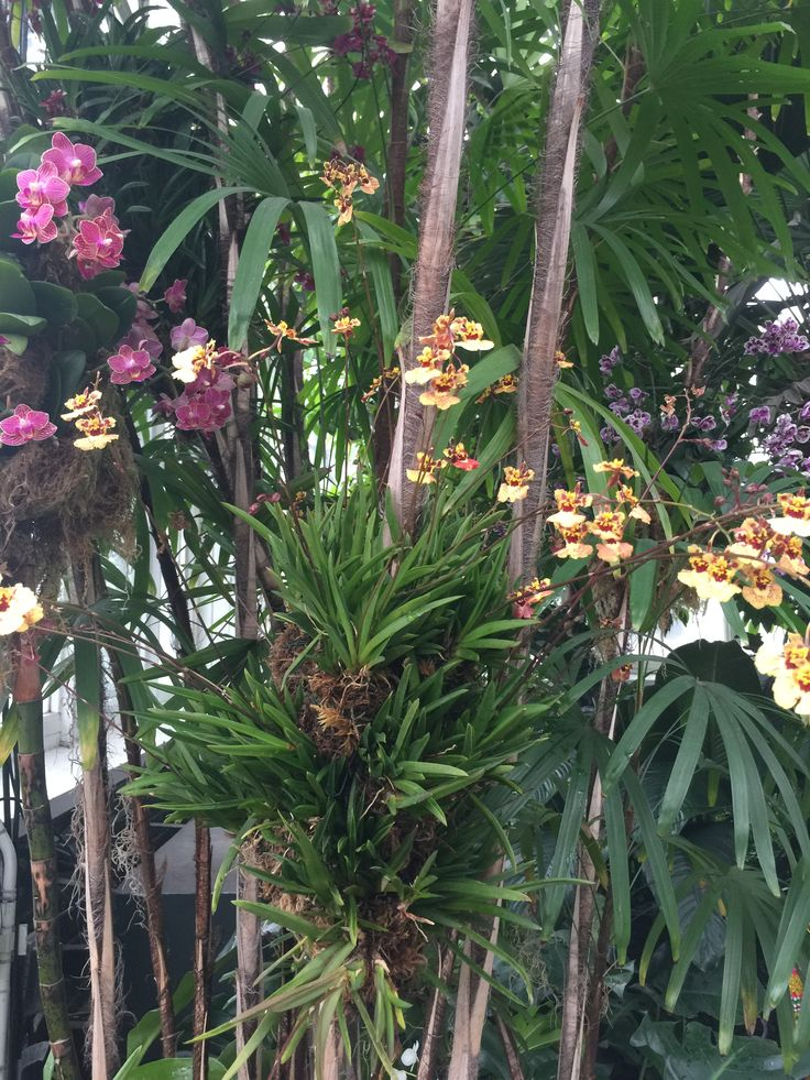 4/17 NY botanical garden orchid show. Tolumnia grouping on board