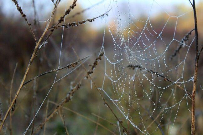 Spider web a Foto 37