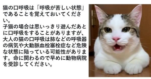 大人の猫が運動の後に犬のように口呼吸をした場合には 呼吸器の病気や大動脈血栓塞栓症など危険な状態に陥っている可能性があります もしそうなった場合には動物 病院に連れて行ってあげてください 猫 苦しい 拡散