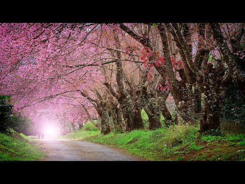 Relaxing Piano Music: Beautiful Romantic Music, Relaxation Music, Soft Music, Relaxing Music ★92 - YouTube