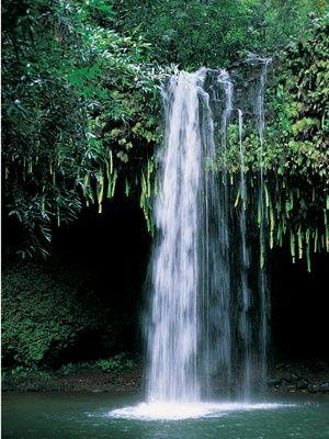 Manoa Falls - Honolulu, HI - Amazing memories hiking this beautiful trail with the family!