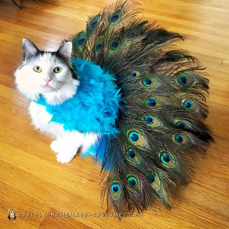 pretty peacock cat costume literally tells its own tail - Halloween Costumes For Kittens Pets