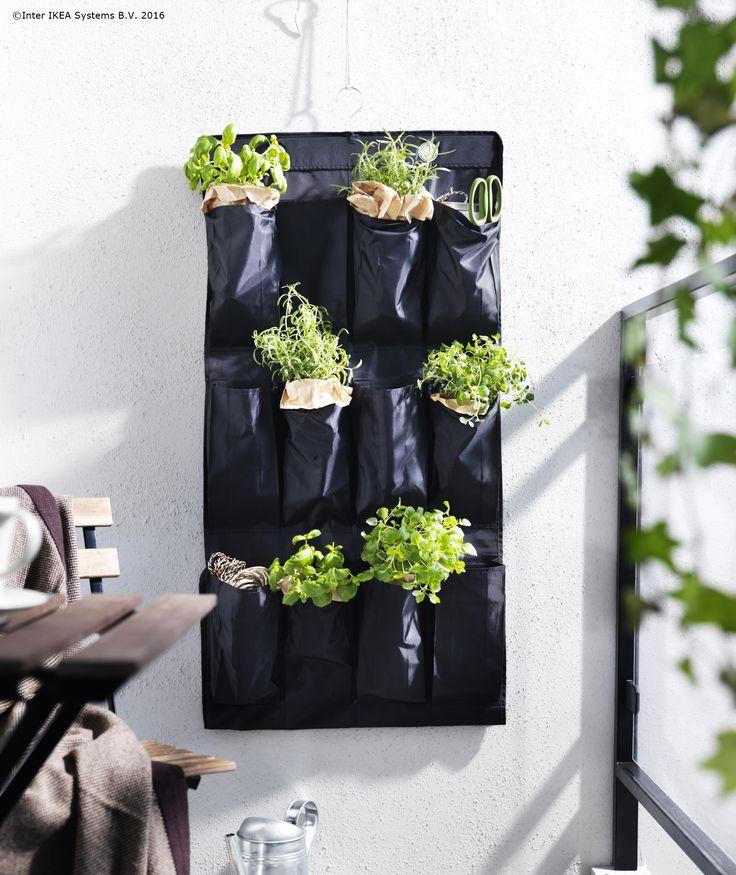 Plantele tale își găsesc locul oriunde atunci când sunt în creștere.