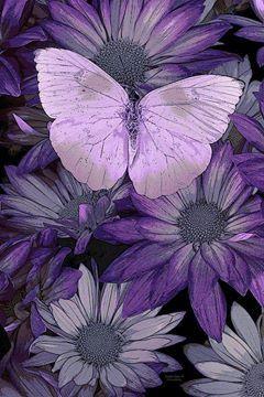 5/6/14   Purple Butterflies