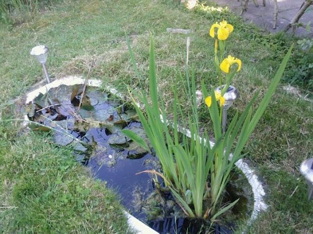 My garden - KOKEN MET ONKRUID: DE TUIN