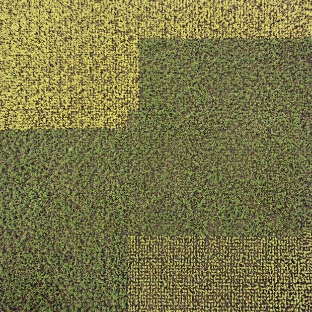Gerco de Ruijter / Almost Nature / Boskoop 2012 Untitled #02. Aerial views of tree farms in the Netherlands.