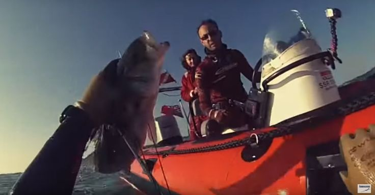Spearfishing - Vidéo septembre 2015 - Emerald Water - FRANCE - Video Aw...