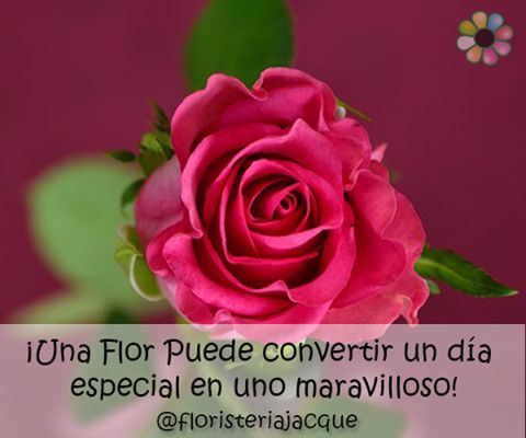 Sabias que una #flor puede convertir un dia especial en uno maravilloso! Regala #floresjacque Regala #amor Pedidos Pbx: 448 66 66