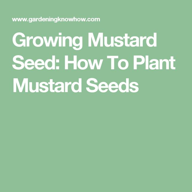 Growing Mustard Seed: How To Plant Mustard Seeds