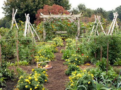 Best 25 small vegetable gardens ideas on pinterest for Country vegetable garden ideas