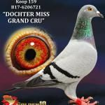 """159 - B17-6206721 """"DOCHTER MISS GRAND CRU"""" ♀   De Duif"""