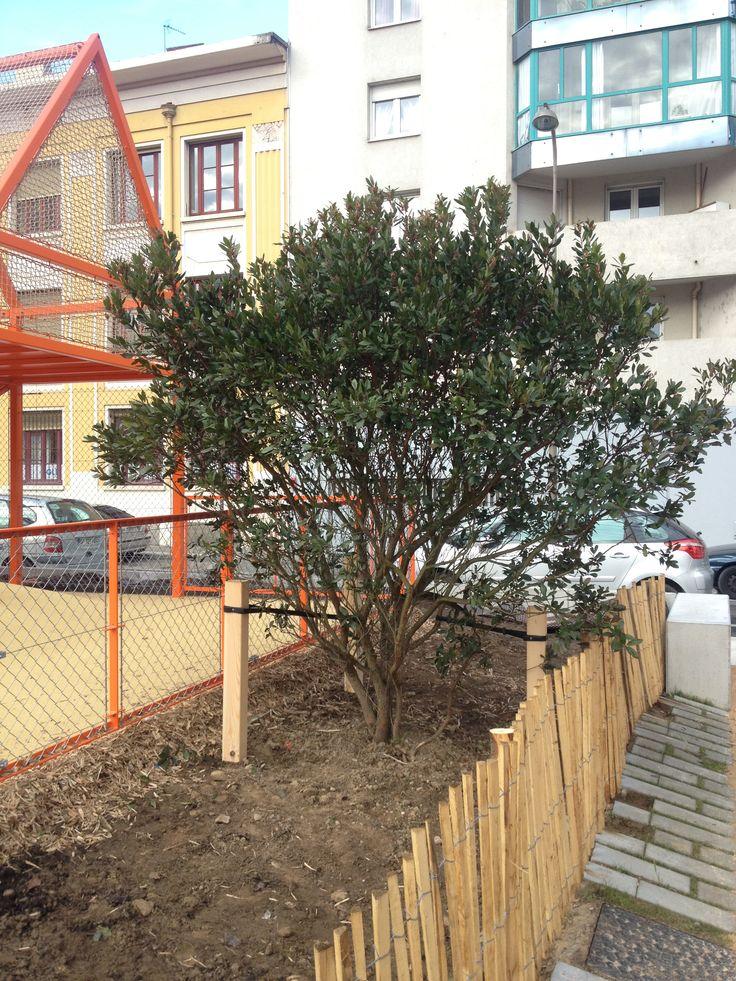 1000 id es sur le th me arbuste persistant sur pinterest for Arbuste pour jardin