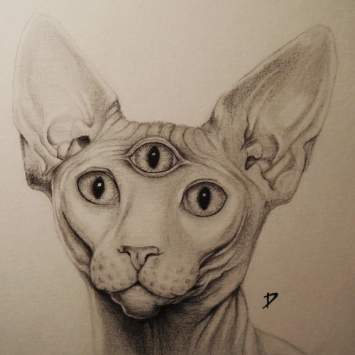 17 Best Images About Sphinx On Pinterest Cats Yoda Cat