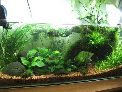 Tharsis' 20 Gallon long aquascape fish tank | via MonsterFishKeepers.com