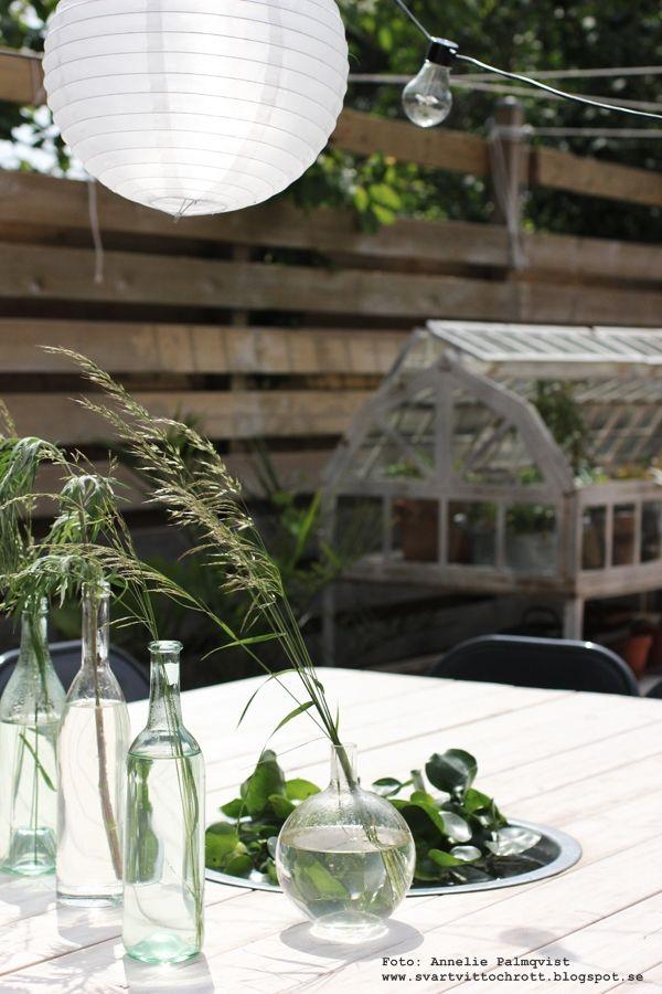 växthus, trädäck, uteplats, vattenväxt, vattenväxter, växt, växter, vatten, vattenhyacint, vattenhyacinter, blommor, grönt, utemöbler, altan, inredning, inredningsblogg, blogg, webbutik, webbutiker, webshop, ljusslinga, ljusslingor, belysning, bord, trädäcket, altanen