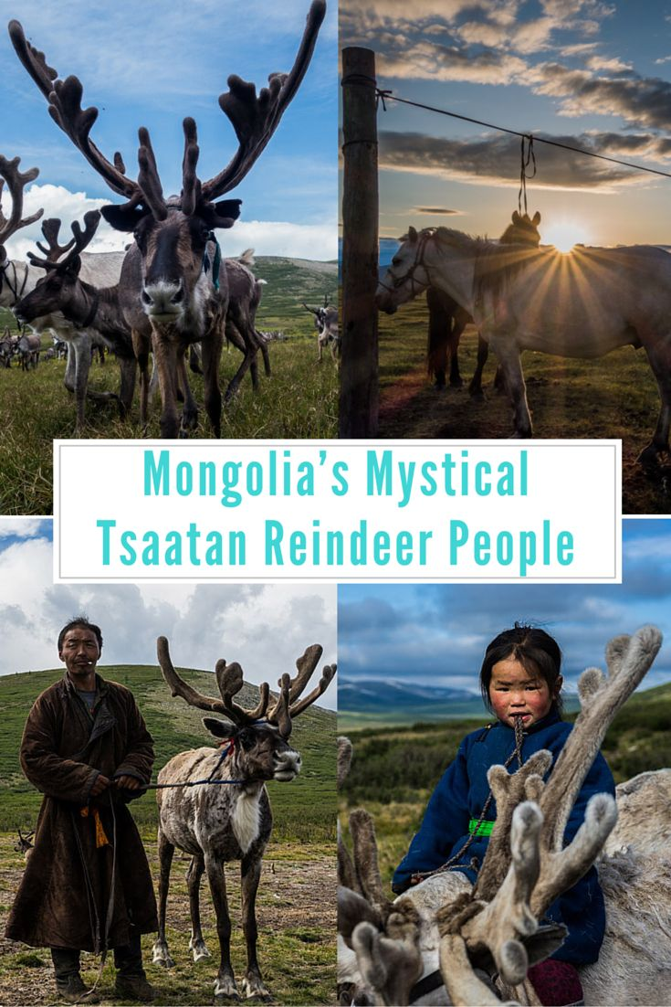 An adventure to visit the Tsaatan reindeer herders in Mongolia is one of the most rewarding travel experiences we have done. Here are our best photos of the Dukha reindeer people. #mongolia #offthebeatenpath #adventures