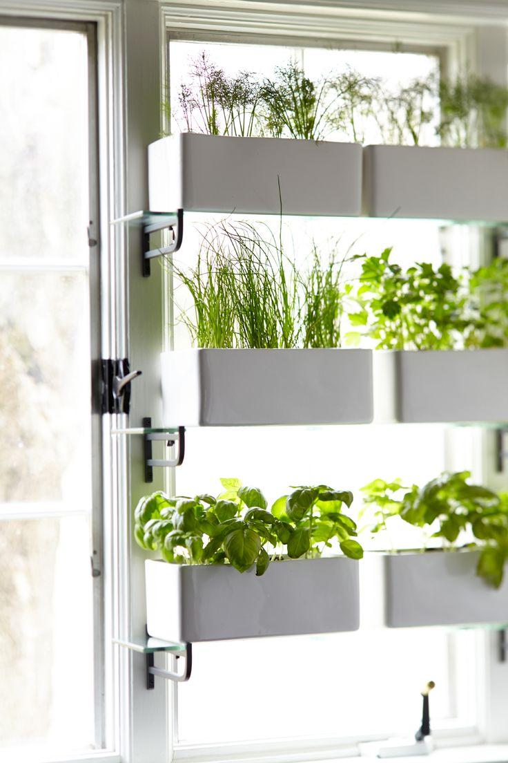 Kitchen window privacy garden using ikea glass shelves for Ikea garden shelf
