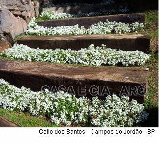 Plantas anuais - Forrações - CASA E CIA.ARQ - Paisagismo