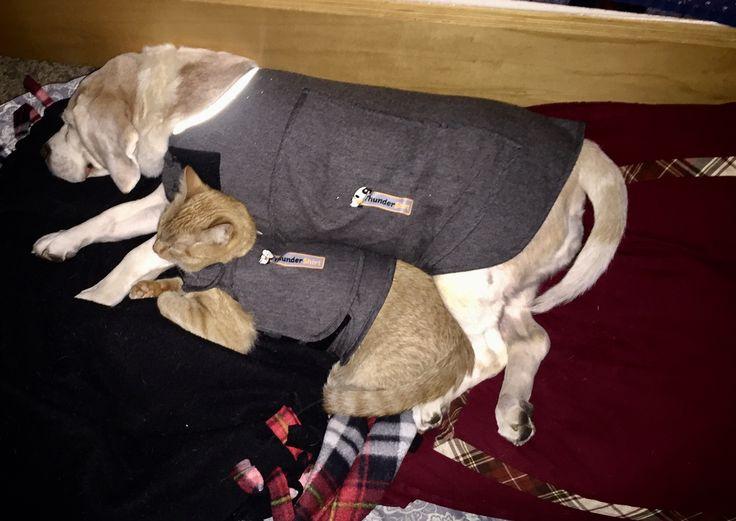 Thunder Buddies; cuddling like badasses http://ift.tt/2lrFRGQ