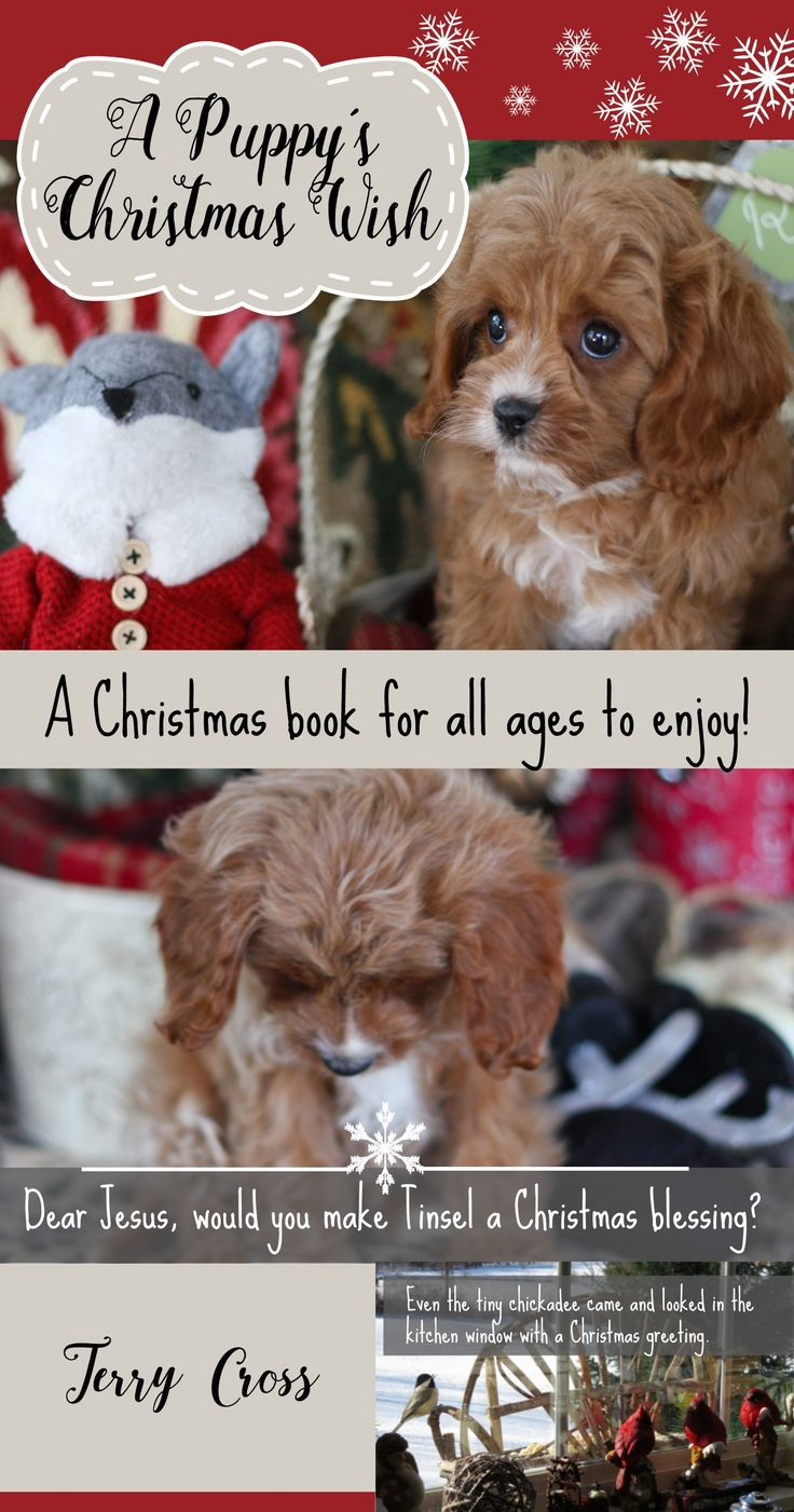 Christmas Puppy. Christmas story for kids. Dog Book. Dog story for kids. Dog Christmas gift. Gifts for a dog lover. Cavapoo. Cavapoochon. Cavachon.