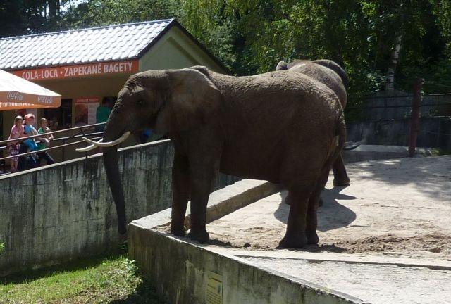 VýLet nA víKend - zoologické záhrady | ZSSK Slovakrail