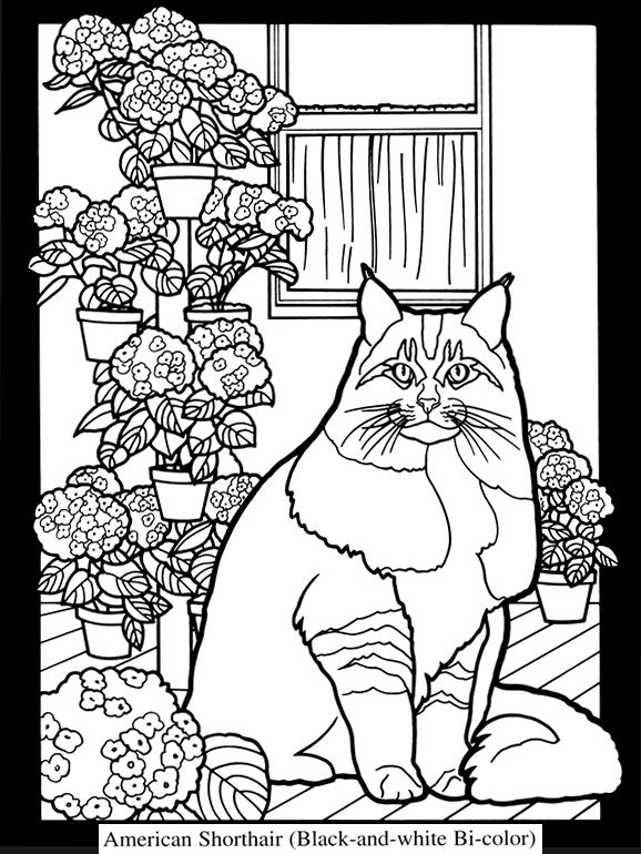 welcome to dover publications adult coloringcoloring bookscoloring