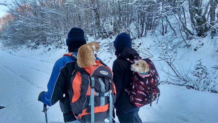Hiking with a dog and a cat....
