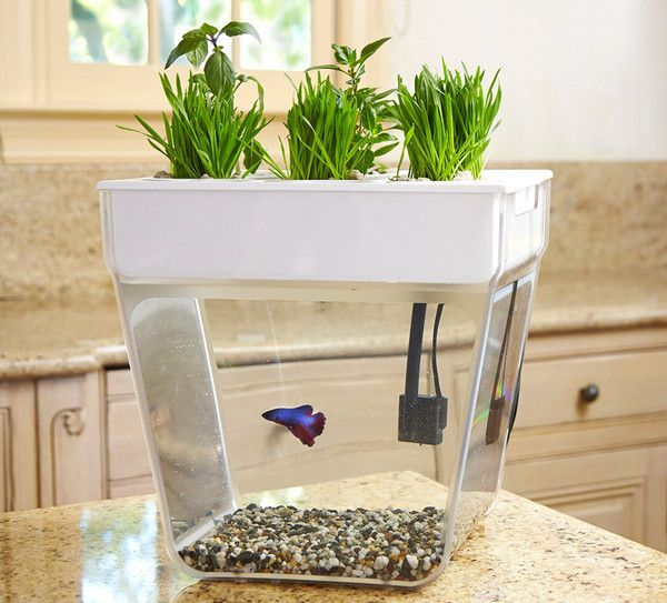 Bring the garden inside with a self-cleaning fish tank that grows food! The Water Garden (formerly the Aqua Farm) creates a closed-loop ecosystem—the fish feed #AquaponicsSystem
