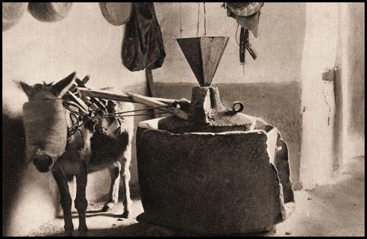 Fotografie antiche di Sardegna: NUORO. Antica macina del grano azionata dall'asinello bendato (1938)