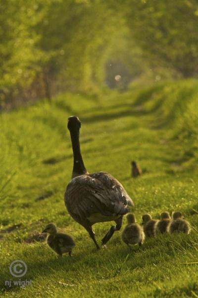 ♥mama and babies♥