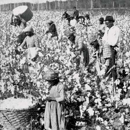 Slavery did not end till the Civil War this is a picture of them picking cotton