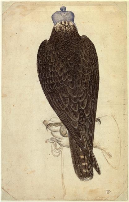 Pisanello | Jeune faucon lanier ou jeune faucon pèlerin armé, perché sur une main gantée | Images d'Art